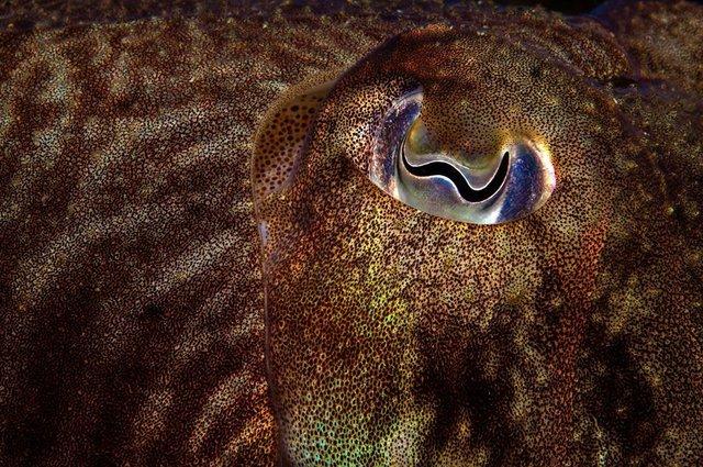 British Wildlife Photography Awards: вибрано 15 найкращих фотографій тварин за десятиліття - фото 428893
