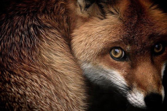 British Wildlife Photography Awards: вибрано 15 найкращих фотографій тварин за десятиліття - фото 428896