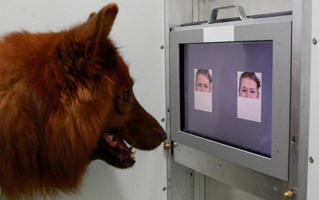 Учені з'ясували, чи можуть собаки впізнавати людей по обличчю - фото 429082