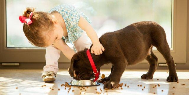 Чому дітям корисно мати собаку - фото 429672