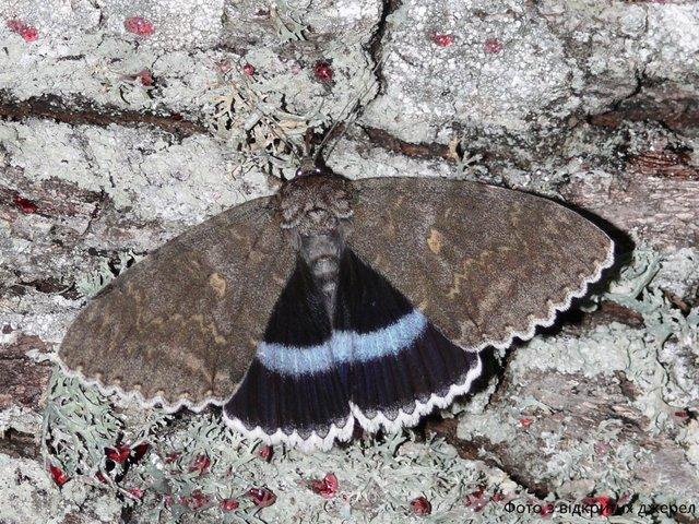 У Чорнобилі помітили метелика значних розмірів: фотофакт - фото 429781