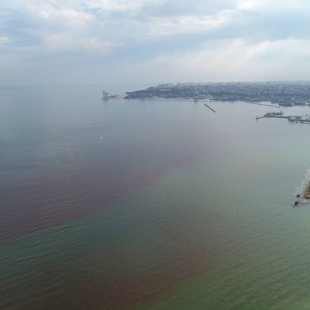 Море біля Одеси стало червоним: фотофакт - фото 429873
