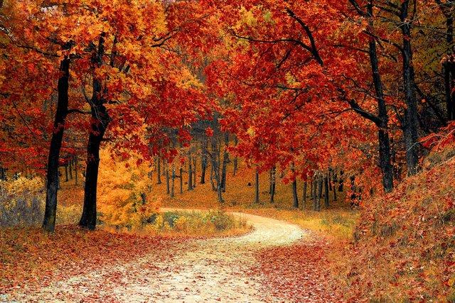 14 жовтня 2020 – яке сьогодні свято: традиції, заборони і прикмети - фото 430011