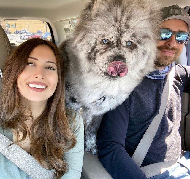 Незвичайний пес породи чау-чау став зіркою в Instagram: фото - фото 430019