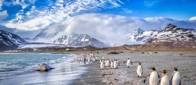 Вчені з'ясували, як на глядачів впливає перегляд програм про природу - фото 430494
