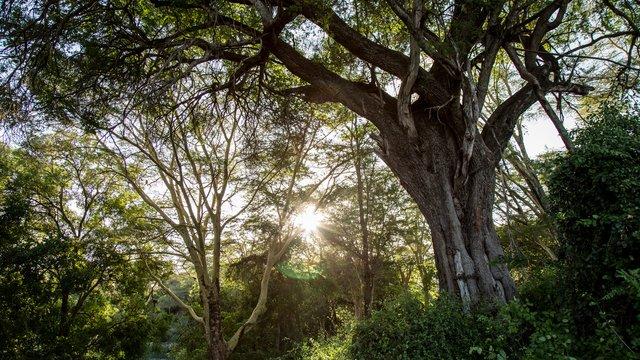 Apple виділила 200 мільйонів доларів на порятунок лісів - фото 456028