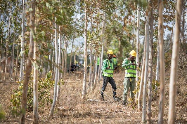 Apple виділила 200 мільйонів доларів на порятунок лісів - фото 456029