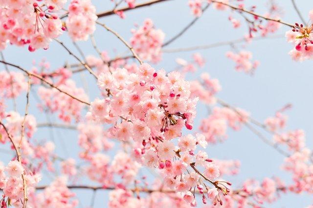 19 квітня 2021 – яке сьогодні свято: традиції, заборони і прикмети - фото 456255